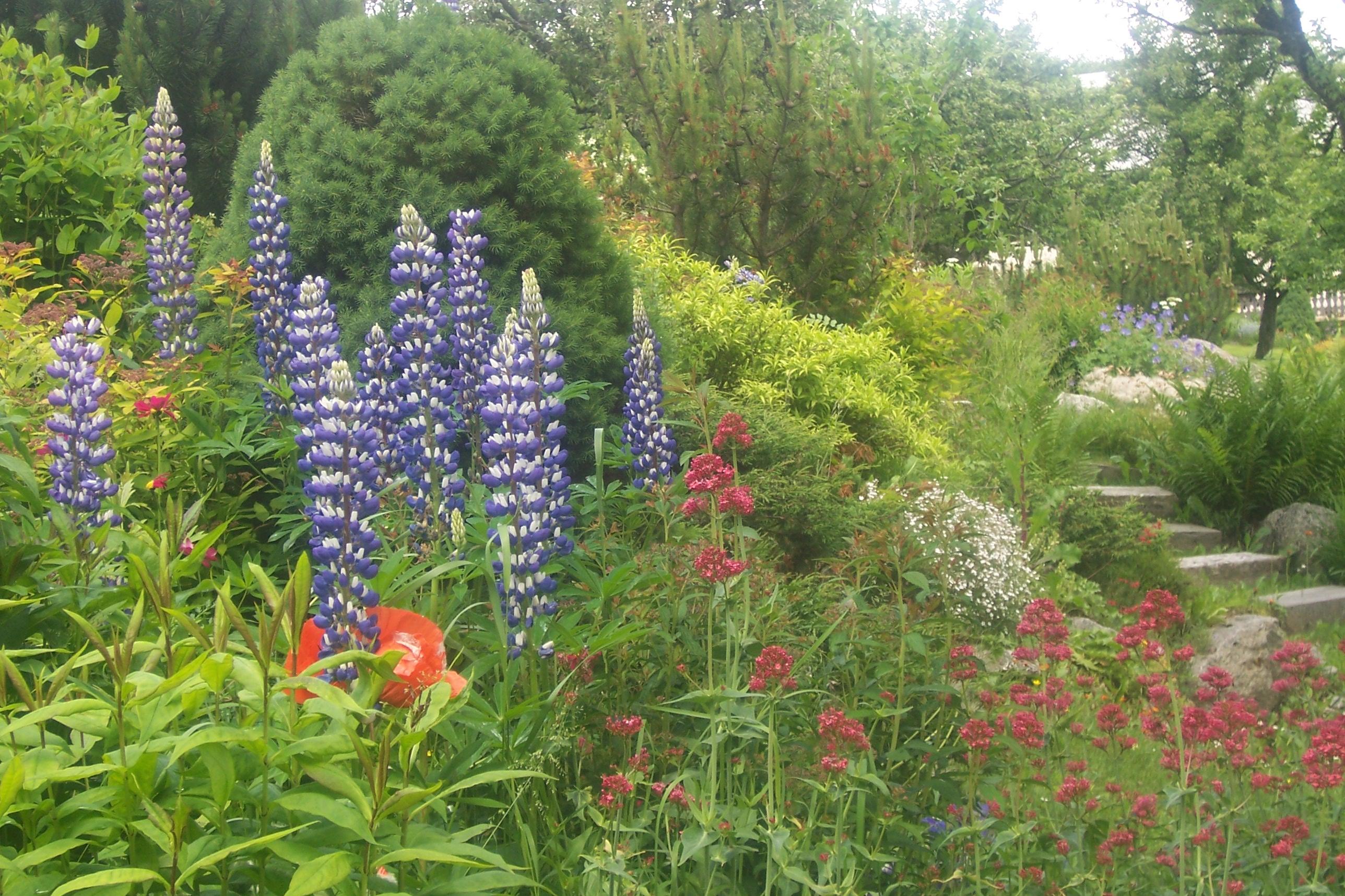 Jardin Fleuri Paysagiste 1731